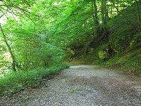 sentiero_nella_faggeta