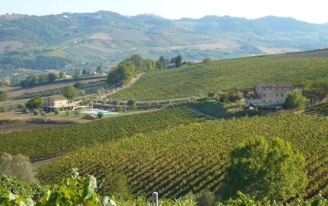 Prodotti biologici Regione Marche