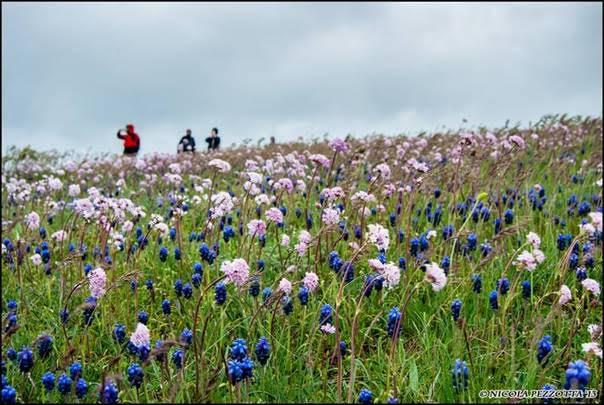 fioriture nelle Marche